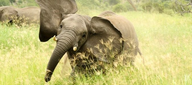 Mozambique safaris, tours and packages