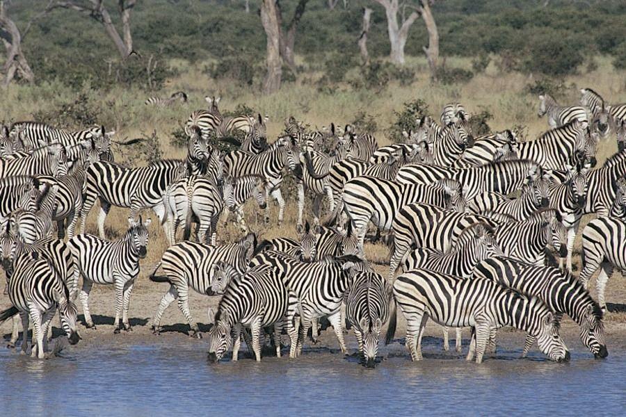 Namibia Tours