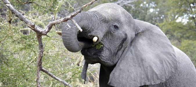 Fly in Safaris